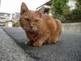 路上に佇む猫