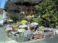 016 花いっぱい