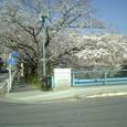 37 木津根橋と桜